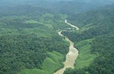 Organizaciones internacionales ofrecen asistencia financiera a Indonesia para reserva forestal