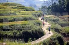 Celebran maratón de montaña internacional en Vietnam