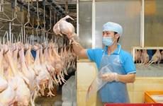 Vietnam dispone de varias oportunidades para elevar exportaciones a EAU y Kuwait