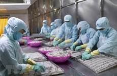 Reportan incrementos en exportaciones de productos acuícolas de Vietnam a Estados Unidos