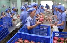 Exportaciones de frutas y verduras de Vietnam registran crecimiento récord