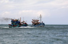 Provincia centrovietnamita de Thanh Hoa robustece la lucha contra pesca ilegal