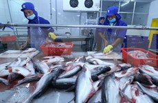 Empresas vietnamitas amplían exportaciones de atún a Oriente Medio