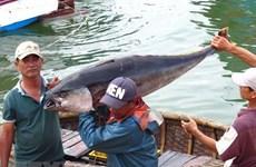 Vietnam opta por desarrollo sostenible y responsable de la pesca, asegura ministro
