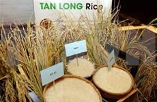 Tercer festival de arroz de Vietnam tendrá lugar en provincia de Long An