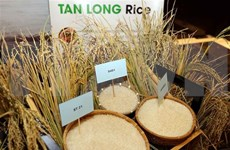 Vietnam exportó cinco millones 200 mil toneladas de arroz en octubre