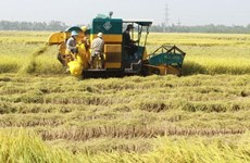 Respaldan a delta del río Mekong mejorar capacidad de respuesta al cambio climático