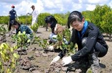 Agricultores vietnamitas se benefician por nuevo modelo de plantación forestal