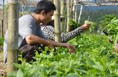 Ciudad vietnamita de Can Tho coopera con Países Bajos en desarrollo sostenible de agricultura