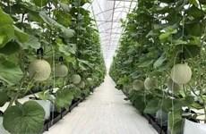 Israel comparte con Hanoi experiencias en agricultura de alta tecnología