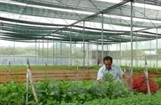 Provincia vietnamita de Phu Tho impulsa aplicación de tecnología moderna en agricultura