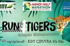 """Centenares de personas participan en el maratón """"Corre por Tigres"""" en Hanoi"""