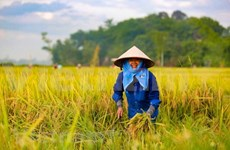 Celebran VII Congreso de la Asociación de Agricultores de Vietnam