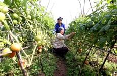 Países Bajos mejora papel de la mujer en producción y negocio en agricultura en Vietnam