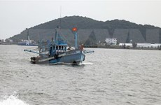 Provincias vietnamitas realizan esfuerzos para luchar contra la pesca ilegal