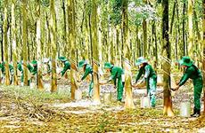 Vietnam cuenta con 235 hectáreas de bosques certificados bajo el sello FSC de manejo sostenible