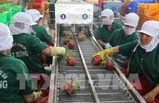 Vietnam impulsa exportación de productos agrícolas a China