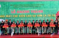 Ponen en operación plata procesadora de látex en provincia vietnamita de Son La