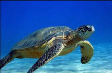 Provincia vietnamita trabaja por proteger tortugas marinas