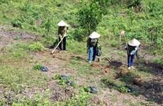 Binh Thuan se esfuerza a reducir la pérdida y degradación forestal