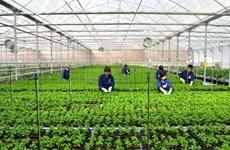 Vietnam cuenta con más de nueve mil empresas agrícolas
