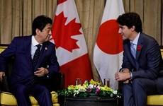 Canadá y Japón discuten medidas para promover oportunidades brindadas por CPTPP