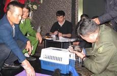 Vietnam rescata a dos ositos tibetanos de contrabando