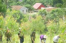 Más de seis mil vietnamitas se benefician del programa UN-REDD