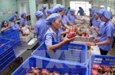 Alcanzaron exportaciones de frutas y hortalizas de Vietnam valor récord en 2018