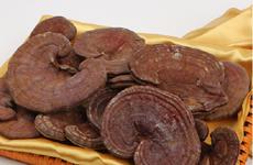 Desarrollan en Vietnam variedad de hongo Lingzhi Nong Lam