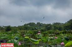 Humedal de Lang Sen, típico ecosistema sudvietnamita
