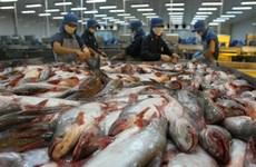 Vietnam proyecta ingresar dos mil 400 millones de dólares por ventas de pescado Tra en 2019