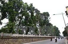 Proyectan plantar en Hanoi 400 mil árboles en 2019