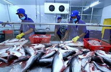Vietnam aspira a ganar 10 mil millones de dólares de exportación de productos acuícolas en 2019