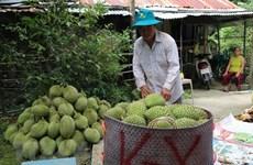 Importará China más de 100 mil toneladas de arroz vietnamita