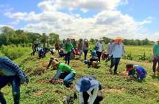 """Adoptarán bibliotecas tailandesas iniciativas """"verdes"""" para reducir emisiones de carbono"""