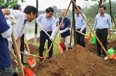 Cultivan en Hanoi más de mil árboles de cerezo, puente de amistad entre Vietnam y Japón