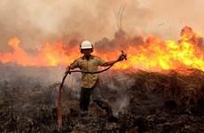 Alto riesgo de incendios forestales en Indonesia