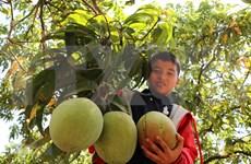 Reportan leve reducción de exportaciones agroforestales y acuícolas de Vietnam este año