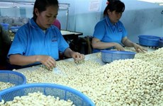 Trabaja Vietnam por construir marca nacional de anacardo