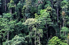 La reserva natural de Pu Luong, destino fascinante para aventureros en Vietnam