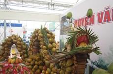 Celebrarán V Festival del Coco en la provincia sureña vietnamita de Ben Tre