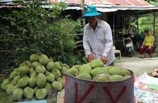 Prevé Vietnam incrementar exportación de frutas y hortalizas a China