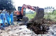 Se enfrasca provincia vietnamita de Quang Ninh en lucha contra peste porcina africana