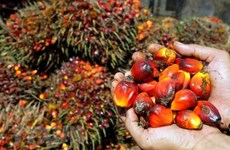Amenaza Indonesia con boicotear mercancías de la Unión Europea