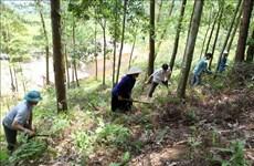Provincia vietnamita de Kien Giang en alerta por posibles incendios forestales