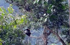 Liberan en Vietnam 88 animales salvajes en el Parque Nacional Chu Mom Ray
