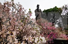 Celebran en Hanoi Festival de flor de cerezo Japón - Vietnam