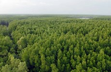 Reporta Vietnam una cobertura forestal superior al 40 por ciento