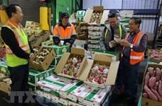 Disminuyeron en Vietnam exportaciones de frutas y verduras en primer trimestre de 2019